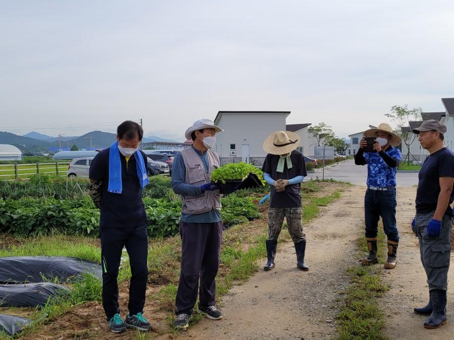 남원시 주생면 가족실습 채제형농장에서의 첫 고구마 수확.