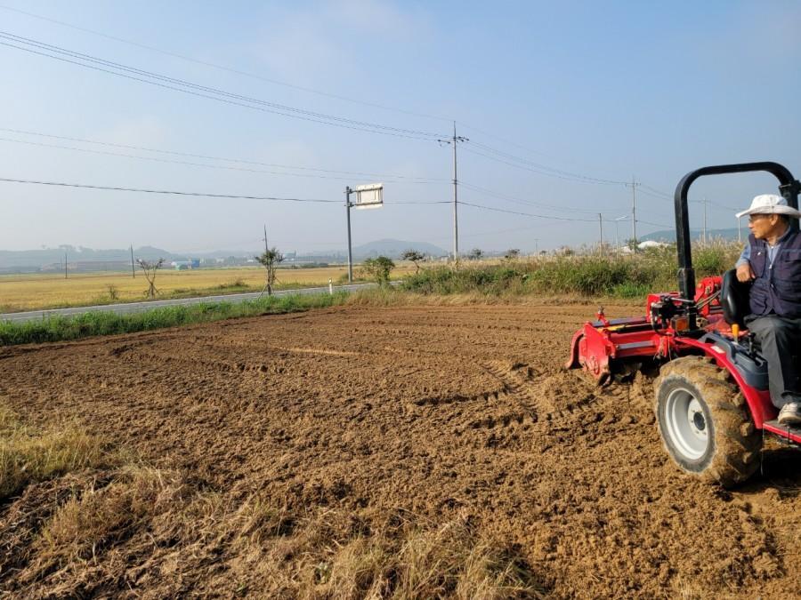 마늘밭을 만들고 마늘을 심었습니다.